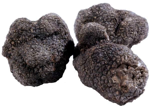 Tuber melanosporum o nero opregiato