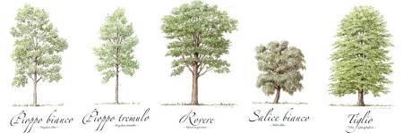 piante da tartufo bianco Alba Canelli