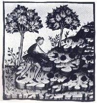 Tartufaio nel Tacuinum sanitatis