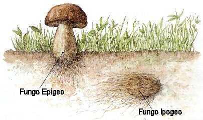 Tartufo e Fungo